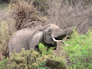 6 Days Ruaha National Park and Selous Game Reserve Fly Safari in Tanzania