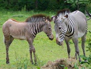 3 Days Fly-In Package Safari in Samburu, Kenya