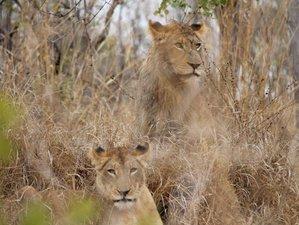 2 Days Big Five Safari in Kruger National Park, South Africa