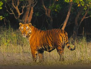 3 Day Amazing River Cruise and Wildlife Tour in Sundarbans