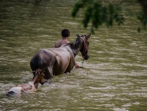 4 Day Luxury Riding Vacation with Mayan Temple and Waterfall Tours in Cayo District, Belize