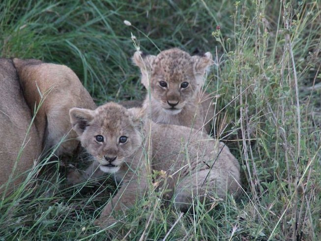 6 Days Best of the Cats Tanzania Safari