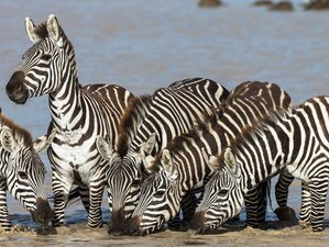 4 Days Budget Group Safari in Masai Mara and Lake Nakuru National Park, Kenya