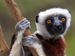 7 Days Lemur Safari Tour in Madagascar