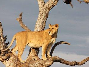 4 Days Adventure Safari in Tanzania