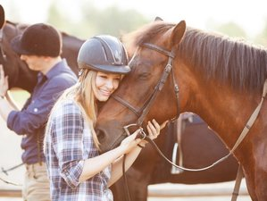 5 Day Advanced Horse Riding Holidays in Stangerode, Saxony-Anhalt
