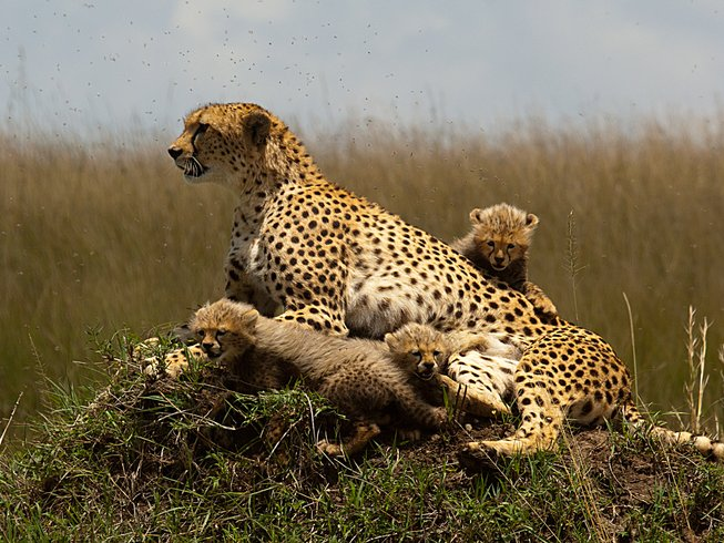 7 Days Adventure Safari in Kenya