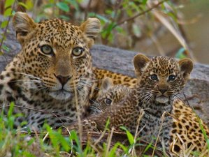 5 Days Highlights of Serengeti and Ngorongoro Crater Wildlife safari in Tanzania