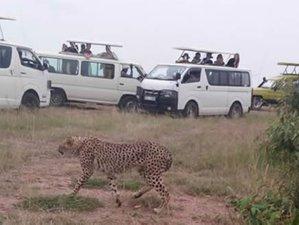 7 Days Masai Mara, Lake Nakuru, Lake Naivasha, and Amboseli Safari in Kenya