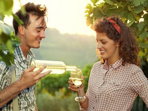 7 Days Cooking Holidays & Wine Tours Italy