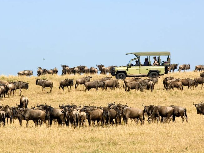 8 Days Migration Safari in Tanzania