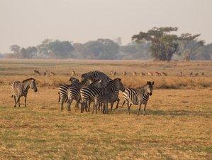 11 Days Wildlife Safari in Busanga Plains and Kafue National Park, Zambia