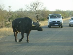 6 Days Budget Self-Drive Safari South Africa