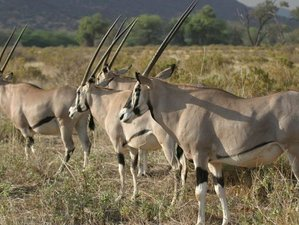 15 Days Wildlife Safari in Kenya