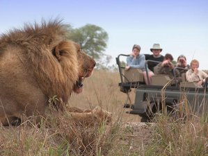 7 Days Kruger and Sabi Sand Safari South Africa