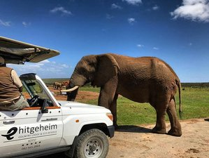 3 Days Luxury Addo Elephant National Park Safari in South Africa