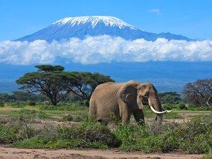 2 Days Tented Camp Safari in Amboseli National Park, Kenya