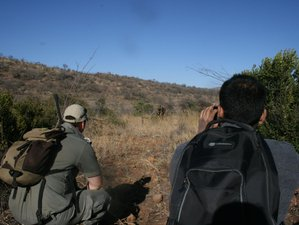 3 Day Bush Walk Safari in Pilanesberg National Park, South Africa