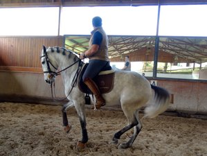 4 Days Normal Dressage Programme (3 Lessons) Horse Riding Holiday in Portugal