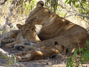 12 Days Thrilling Safari in Selous, Ruaha, Udzungwa, Mufindi and Mikumi, Southern Tanzania
