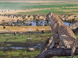6 Days Wildlife Safari in Kenya and Tanzania