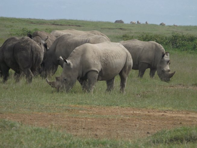 5 Days Untamed Big Five Kenya Safari