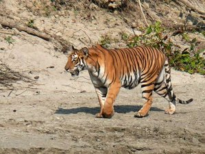 10 Day Nature and Wildlife Safari Tour in Bardia National Park, Nepal