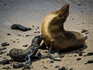 9 Day Wildlife Adventure Exploring the Mythical Galapagos Islands, Ecuador