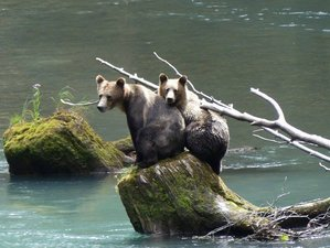 3 Day Exciting Grizzly Bears Watching Experience in Powell River, British Columbia