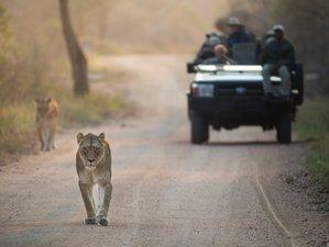 3 Days Kapama Game Reserve Lodge Safari in South Africa