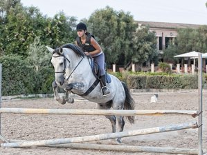 8 Day Jumping and Dressage Horse Riding Holiday in Mallorca, Balearic Islands