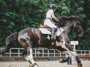 Level: Advanced Riding