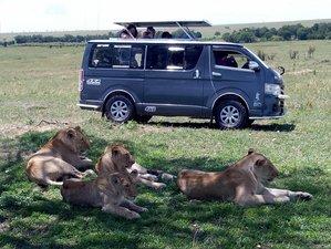 3 Days Great Migration Camping Safari in Maasai Mara National Reserve, Kenya
