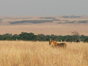 4 Days Maasai Mara National Reserve Safari in Narok County, Kenya