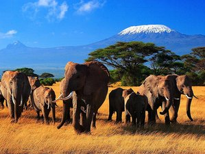 3 Days Kenya Safari to Taita Hills Wildlife Sanctuary & Amboseli National Park