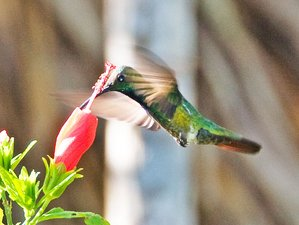 11-Daagse Vogelspotsafari in Cancun, Quintana Roo