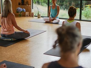 4 Day Wellness Weekend and Yoga Retreat in New Plymouth, Taranaki