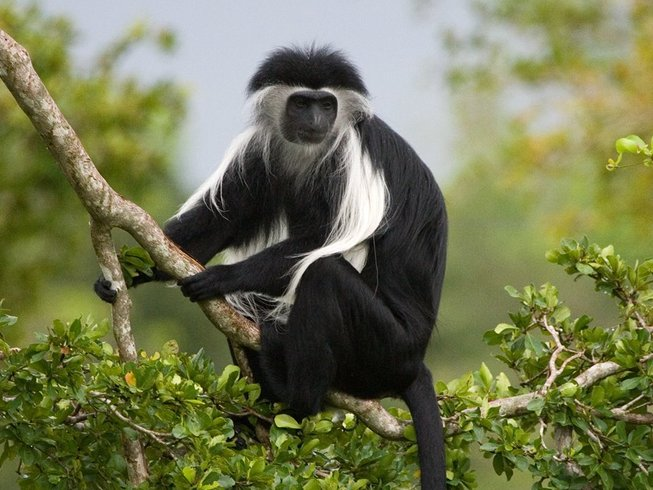7 Days Gorilla Trek and Chimpanzee Safaris in Uganda
