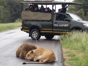 6 Days Classic Safari in Balule Nature Reserve and Kruger National Park, South Africa