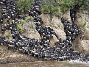 4 Days Great Wildebeest Migration Safari Maasai Mara, Kenya