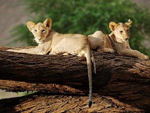 10 Days Big Five Safari Tour in Kenya