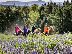 4 Day Riding Between Rivers Horseback Riding Holiday in Selfoss, Árborg
