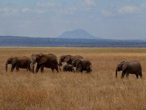 7 Days Mind Blowing Private Camping Safari in Tanzania