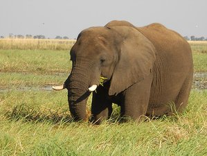 6 Days Mokoro Safari in Botswana