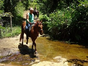 7 Days Eco Ranch and Advanced Trail Riding in the Beautiful Natural Setting of Bahia, Brazil