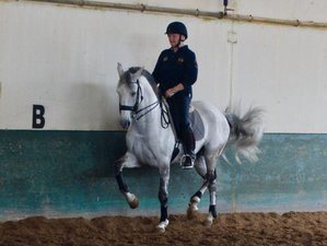 4 Days Five-Lesson Normal Dressage Horse Riding Holiday in Portugal
