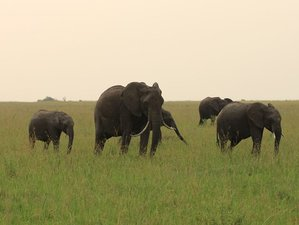 7 Days Kenya  Big 5 Budget Safari