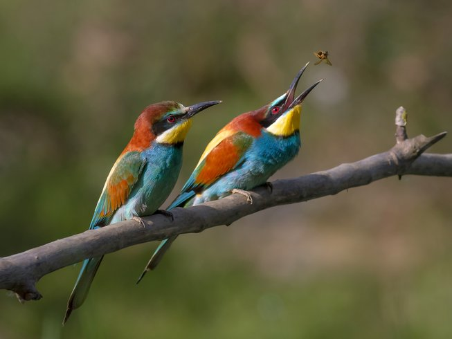 3 Days Bird Watching Safari in Zambia