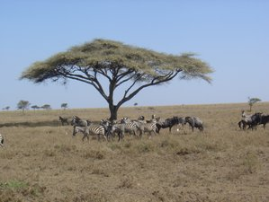 11 Days Indellible Wildlife Tanzania Safari
