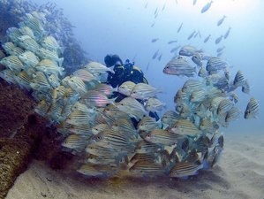 4 Day Adventure Dives Down South in Kirinda and Yala, Sri Lanka